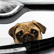 Pug Bull Dog Boot Peeking Funny Stickers Decals Vinyl Window Bumper Car Van Bike Archives Statelegals Staradvertiser Com