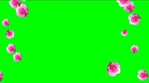 fooe falling roses with chroma key