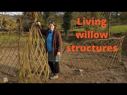 How To Make A Living Willow Fence Youtube