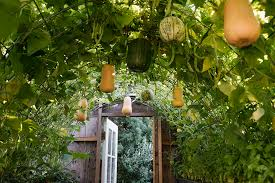 ernut squash garden trellis