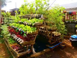 kitchen garden full of fresh herbs