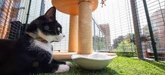 Cat Balcony Enclosure The Ultimate Urban Cat Run