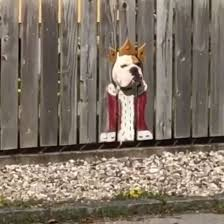 This Bulldog Loves Watching The Street Through A Hole So Owner Painted Costumes On The Fence