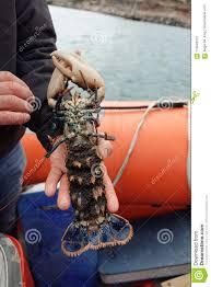 389 Eggs Lobster Photos - Free ...