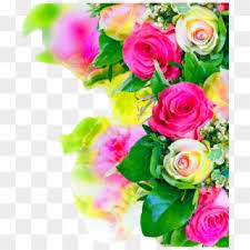 rose flower background hd free