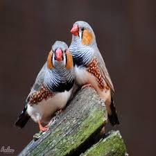 صور طيور مضحكة 2016 مجموعه صور للطيور حلم النسيان