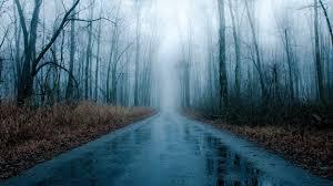 foggy rainy road bare winter fog rain