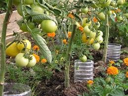 27 vegetable garden ideas to grow more