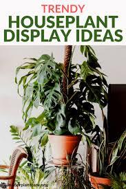 Trendy Houseplant Display Ideas (Easy to DIY!) | House plants, Indoor plant  care, House plants indoor