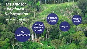 amazon rainforest by madi gosbell on next