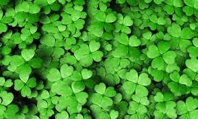 royalty free 4 leaf clover