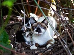 Cat caregivers ask public to stop abandoning cats at Coal Creek | Local |  tdn.com