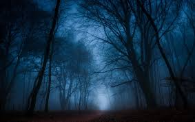 dark forest trees forest hd wallpaper
