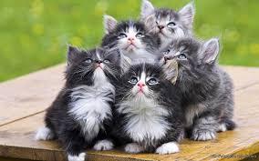 cute kittens wallpaper windows 10