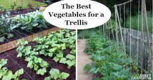 The Best Vegetables For A Trellis For Vertical Gardening