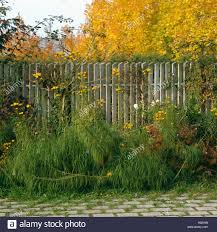 Green Plants In Border Beside Metal Fence In Front Of Colorful Autumn Stock Photo Alamy