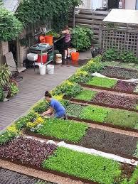 enchanting small vegetable garden