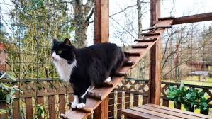 Catio 101 Tips To Create Outdoor Cat Enclosures For Your Cat