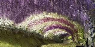 japanese wisteria tunnel garden design