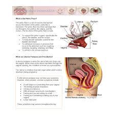 floor disorders anatomy primal