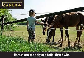 Why Do Horses Need Polytape Fences