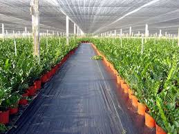 garden weed control mat plastic ground