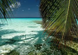 تحميل خلفيات الشاطئ النخيل المحيط أشجار النخيل عريضة