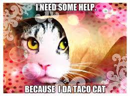 taco cat humor fan art
