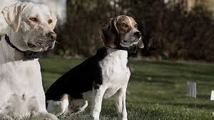 Best Invisible Fence For Dogs News Break