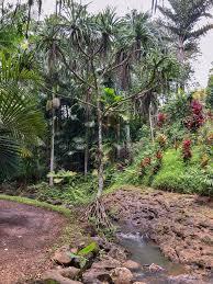 flowing stream princeville botanical
