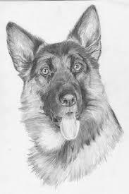 Afbeeldingsresultaat Voor Honden Tekeningen Om Na Te Tekenen Met
