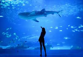 baltimore aquarium parking guide how