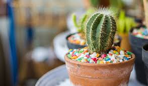why cacti make excellent gifts