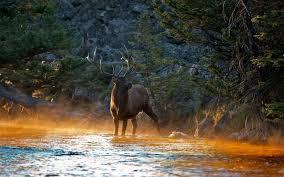 elk hd wallpapers background images