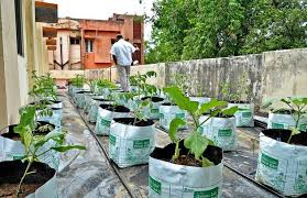 terrace vegetable garden ideas