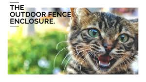 Diy Cat Fencing