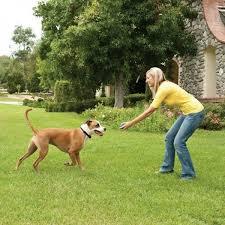 Best Invisible Dog Fence Reviews 2020 Comparison