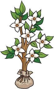 Small Dogwood Tree B Creative For Kids