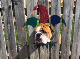 Bulldog S Owner Paints Costumes Around The Holes In The Fence Insider