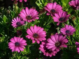 كتابـــي الزهور الجميلة التي لا يعرفها كثير من الناس