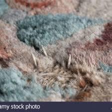 carpet moth larvae looksisquare
