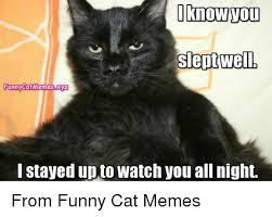 25 best memes about funny cat meme