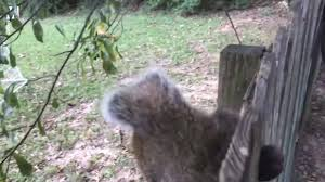 Richard Hartley Parkinson Squirrel Gets Nuts Stuck In A Fence Facebook