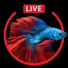 aquarium live hd wallpapers for lock