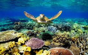 sea turtle swimming underwater scene
