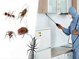 Residential Pest Control Service, Household Pest Control - Jmd Pest Control  Services, Mumbai | ID: 21520957062