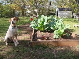 natural dog repellents for the garden