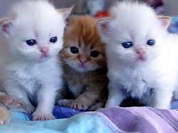 صور قطط كيوت صور قطط حلوة اجمل صور قطط فوتوجرافر