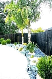 palm trees for landscaping garden tree