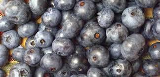 blueberry wine recipe brewery lane